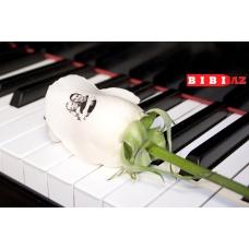 Розы с фото